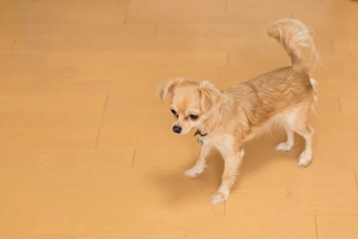 ペットと快適に暮らす方法!フローリングの傷修復・予防方法を解説!